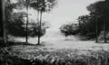 Monochrome Forest SMTIV.png