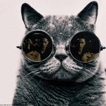 Y ymatrix cat