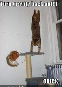 Funny-pictures-gravity-cat