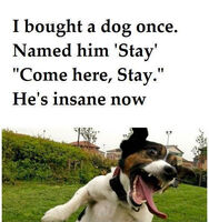 Stay the dog meme