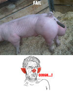 Que asco meme iugh meme iug meme guacala cerdo popo