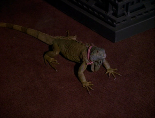 File:Spot-Iguana.jpg