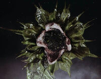 Serleena-true SS 01