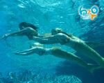 Trio Swimming