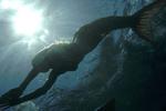 Rikki Swimming