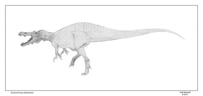 Suchomimus-Todd-Marshall-1024x485