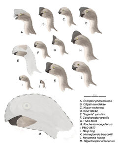 Oviraptorinaeprofiles