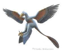 Microraptor-Utako-Kikutani