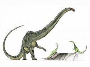 File:Diplodocus-1-300x225.jpg