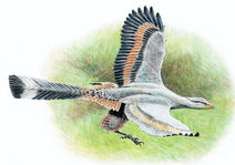 Archaeopteryx-Robert-Back