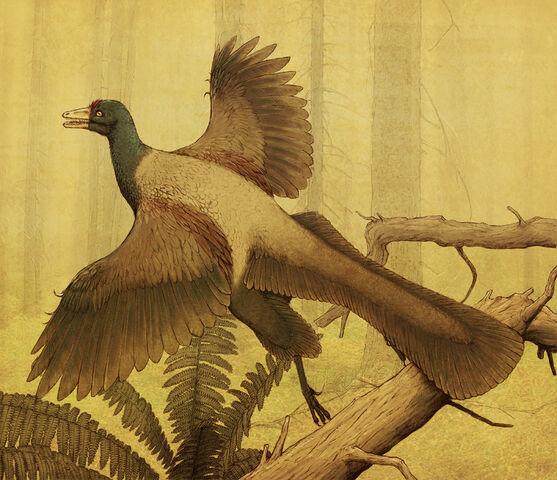 File:Archaeopteryx-Sheil.jpg