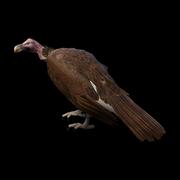 Vulture 606a4d6e74e2