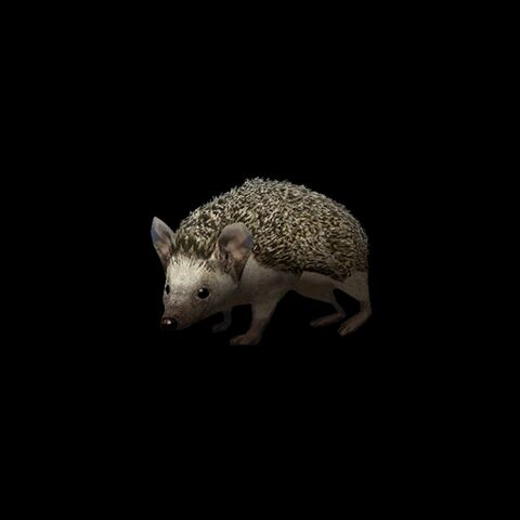 File:Long-eared hedgehog.jpg