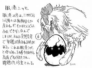 Chicken Artwork