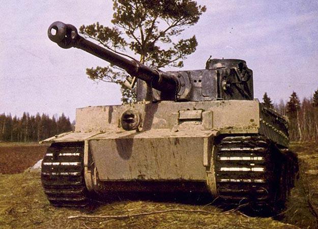 File:Tiger-625x450-1-.jpg