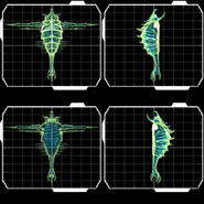 Demo Parasite Queen perspectives scanpics
