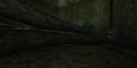 Transport Tunnel C (Tallon Overworld)