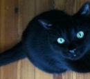 Normandy Cat