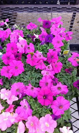 File:Flower2.jpg