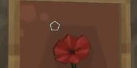 Jardon's Rose
