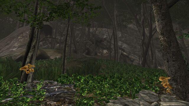 File:Trumpet mushroom cliff.jpg
