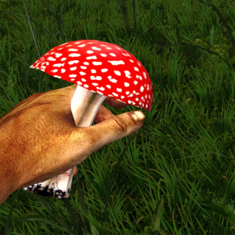 File:Red poisonous mushroom in the hand.png