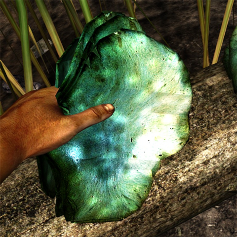 File:Pearl blue shelf fungus in the hand.png