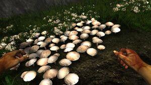 Common white mushroom