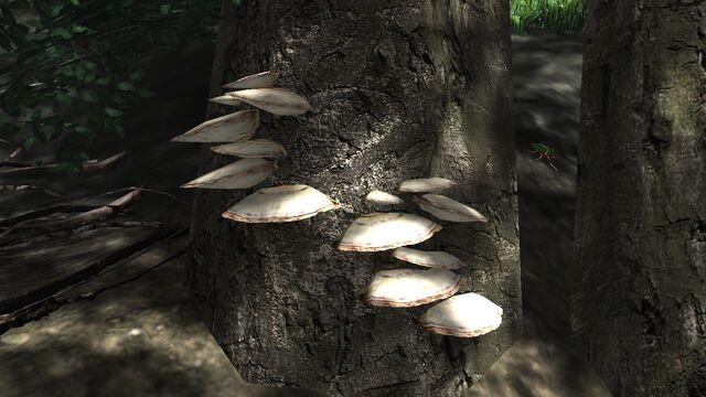 File:Brown shelf fungus.jpg