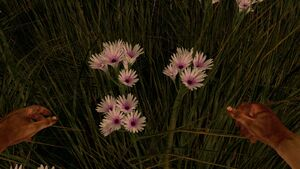 White bundle prairie flower