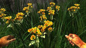 Orange prairie flower