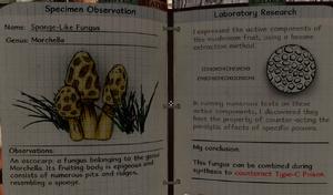 Sponge-like fungus notes