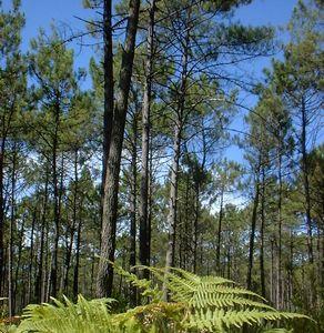 File:Floresta-Gastonesa.jpg
