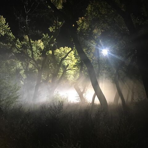 File:BTS Night Forest 4.jpg