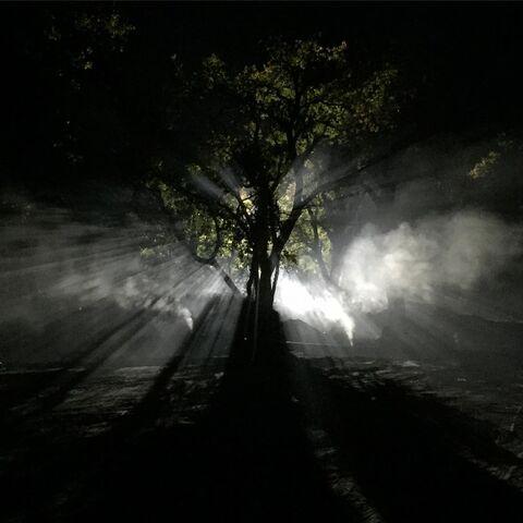 File:BTS Night Forest.jpg