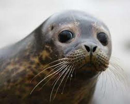 File:Seals.jpg