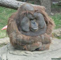 Gorillz