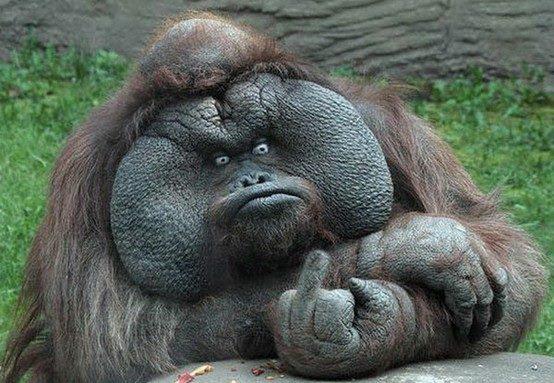 File:GorillaFinger.jpg