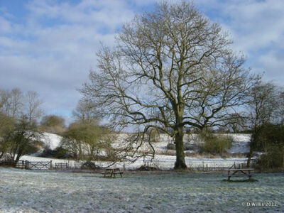 Inkberrow Winter Trees