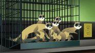 87 free ferrets