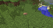 Small Brown Mushroom