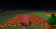 Pig magma