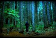 180px-Scary-Forest-Seattle