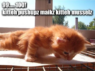 File:99-100-kitteh-pushupz-maikz-kitteh-musselz.jpg
