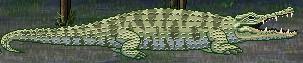 File:Crocodile.jpeg