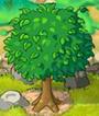 Tree Lvl-5