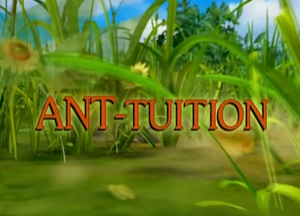 Sunny Patch Ant-tuition