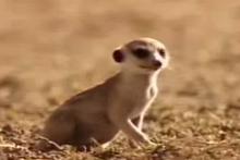 Peanut as a pup.