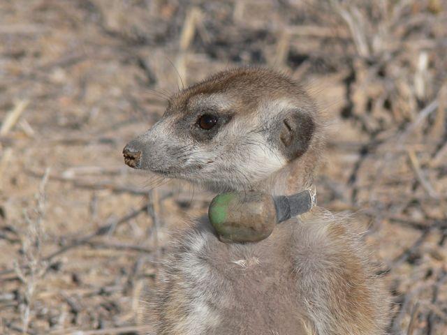 File:Flame Lemurs.jpg