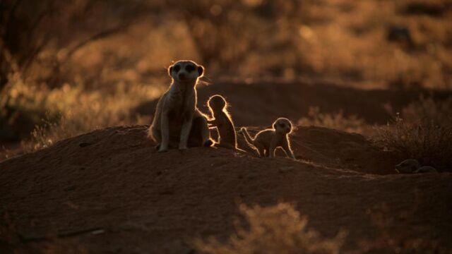 File:Жжmeerkats meerkat family 2.jpg